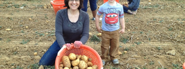 Harvesting Potatoes at First Fruits Farm